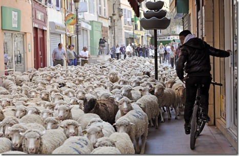 afp_France_sheep_protest_26mar12-878x572